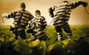 Jailbreak or Not Jailbreak? That is the Question