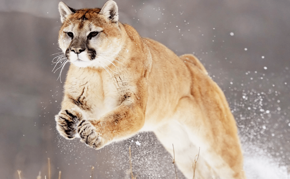 OS X Mountain Lion Developer Preview